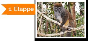 Insel der Lemuren 1. Etappe