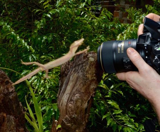 Beim Foto Workshop auf Madagaskar kann das Motiv schonmal in die Kamera springen