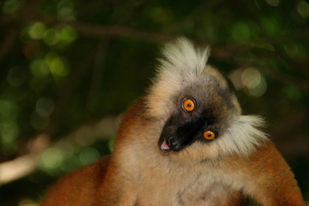 Erfahrungen mit Madagaskar Reisen