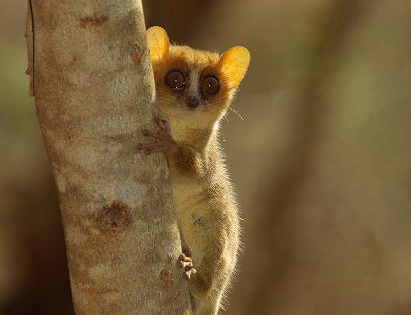 Erfahrungsbericht Reisen auf Madagaskar