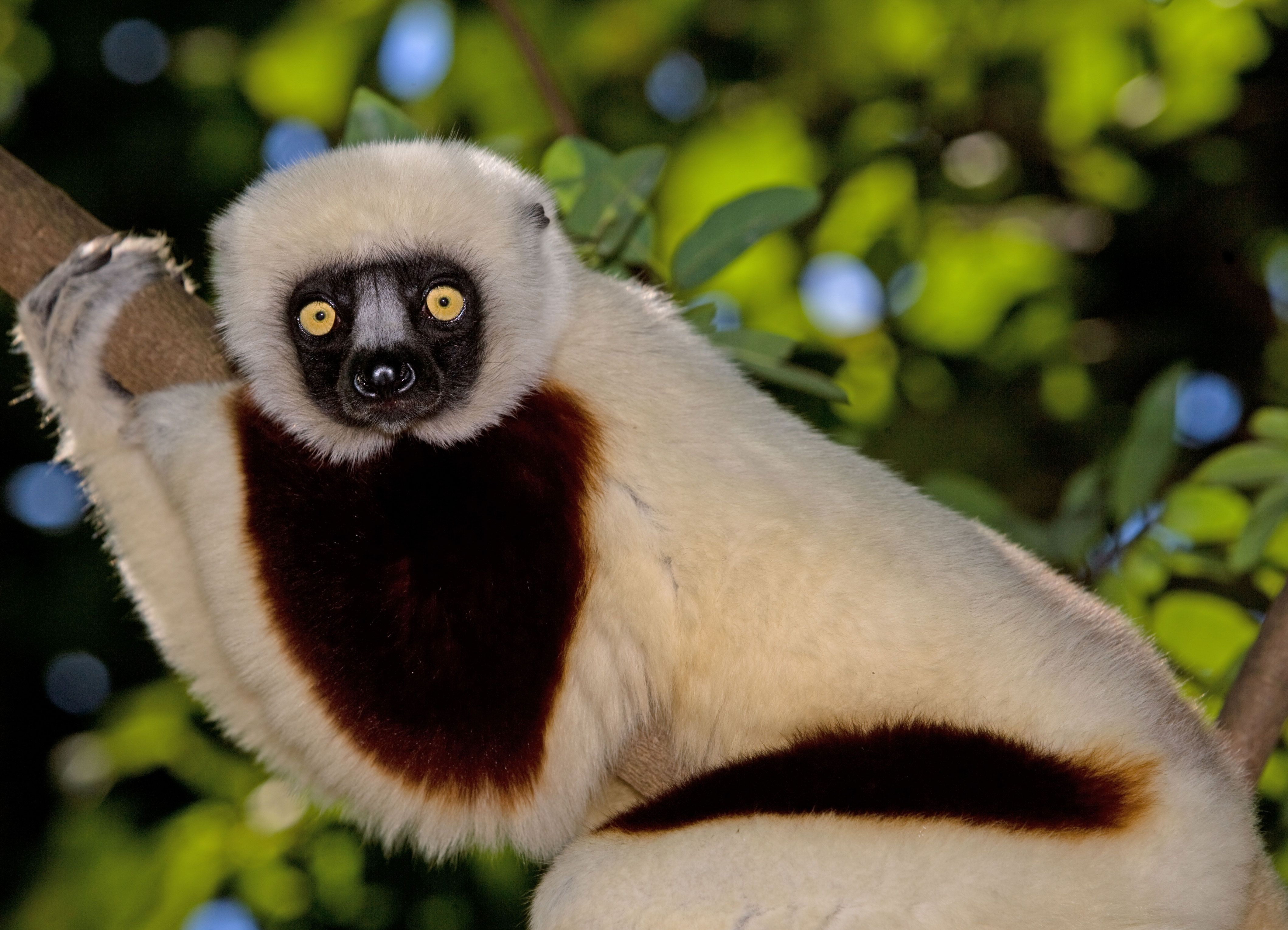Erfahrungsbericht Madagaskareise