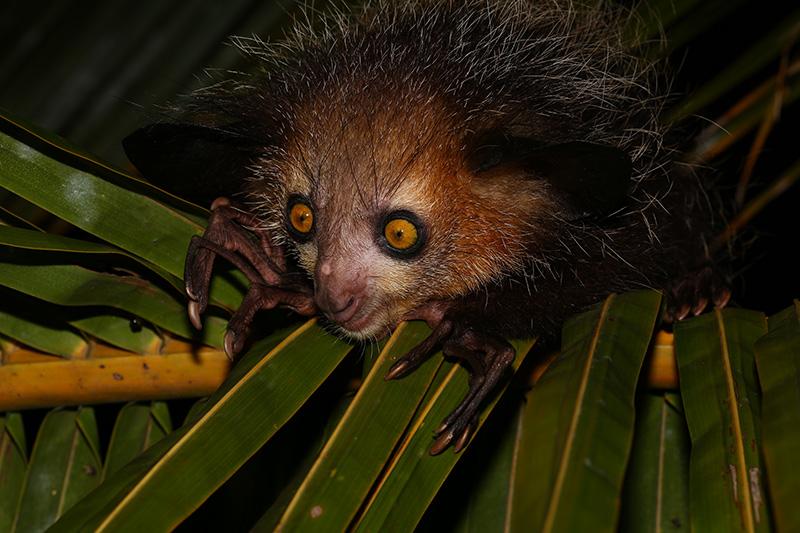 Madagaskarreise Erfahrungen