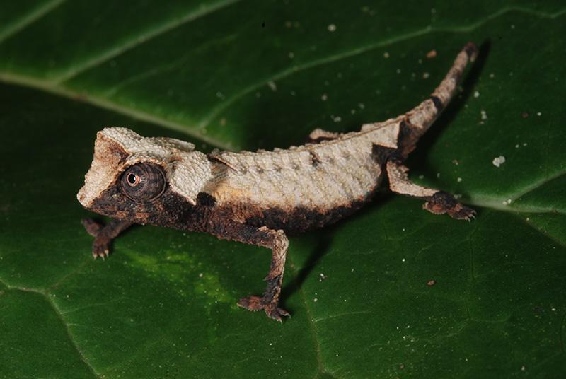 Reisebericht Urlaub auf Madagaskar