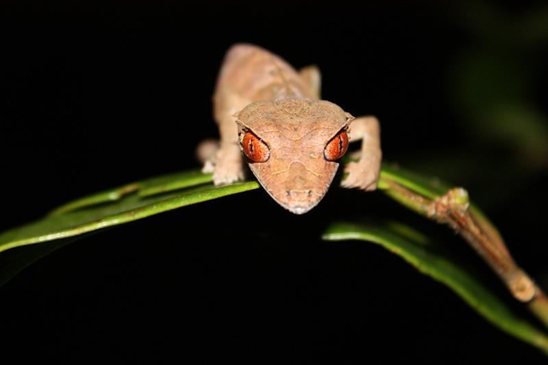 Erfahrungen Madagaskar Reise