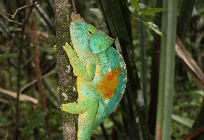 Reisebericht aus Madagaskar