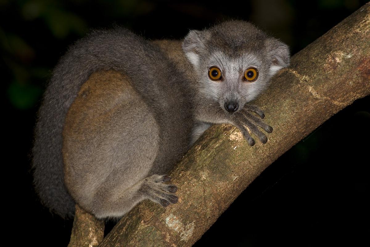 Erfahrungsbericht Madagaskarreise