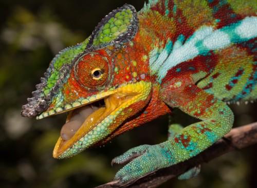 Erfahrungsbericht Madagaskar mit Tanalahorizon