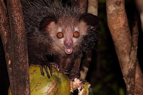 Urlaubsreise auf Madagaskar