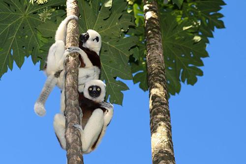 Reisebericht Madagaskar Herpetologisch