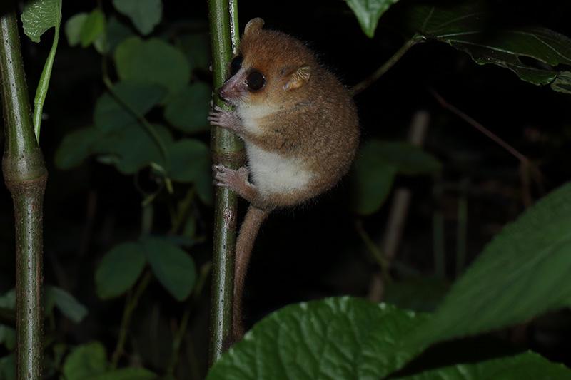 Erfahrungsbericht Reisen auf Madagaskar mit Tanalahorizon