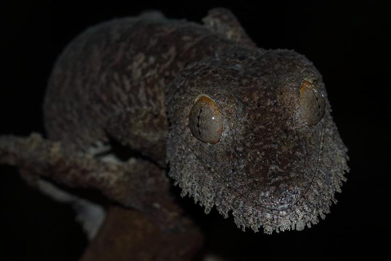 Reisebericht von Madagaskar
