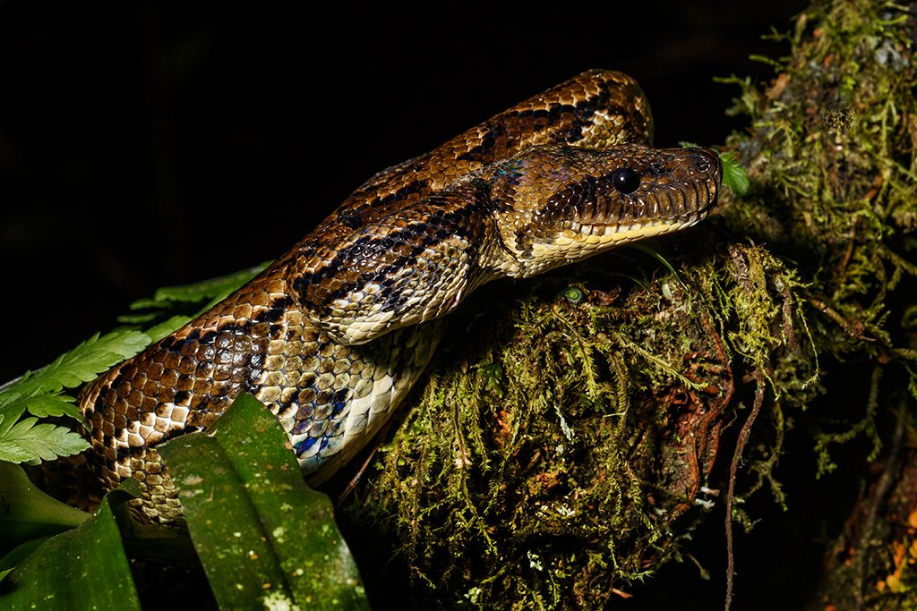 Erfahrungsbericht herpetologische Reise auf Madagaskar