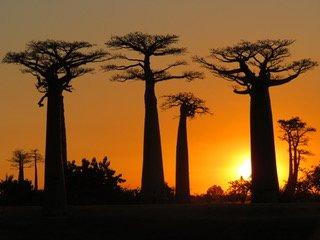Erfahrungsbericht Madagaskar Rundreise