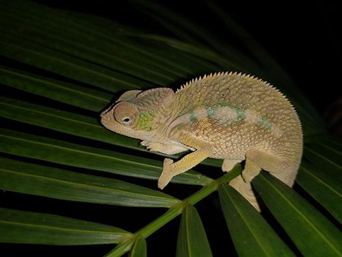 Erfahrungen beim Reisen auf Madagaskar
