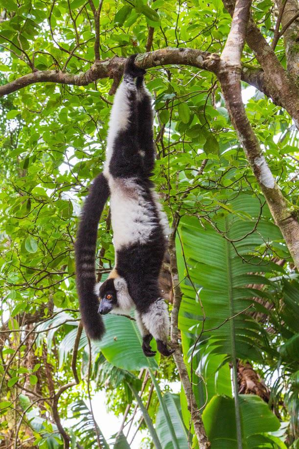 Madagaskarreise mit Tanalahorizon