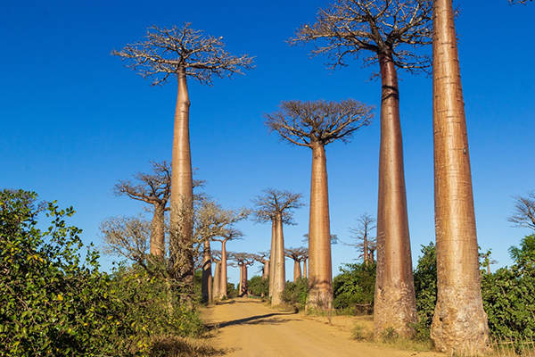Erfahrungen Madagaskarreise mit Tanalahorizon