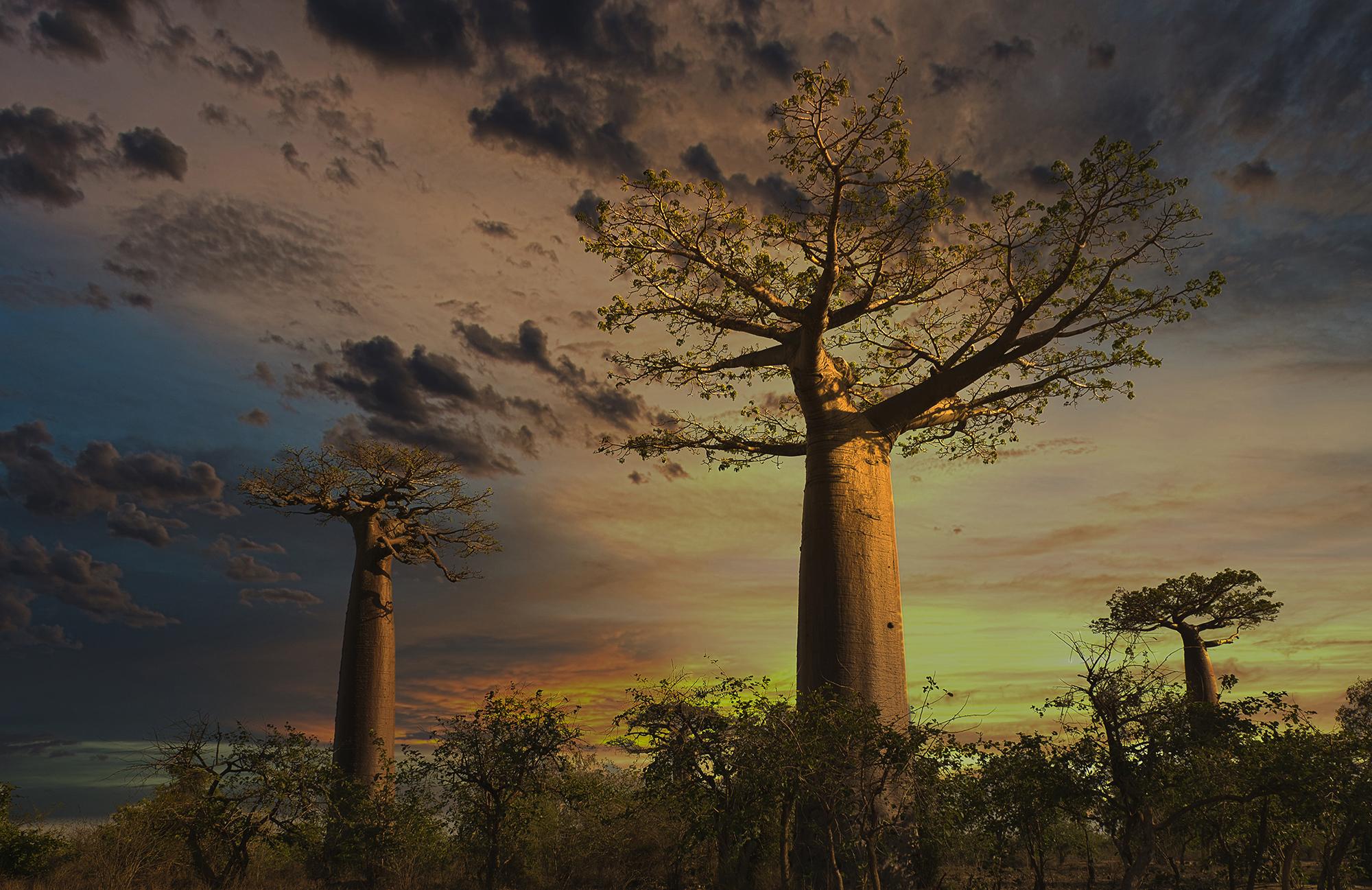 TH_Baobab_0100