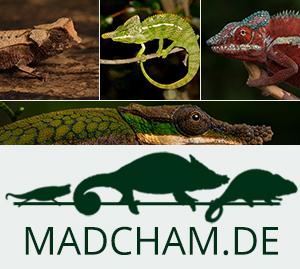 Madcham.de Link