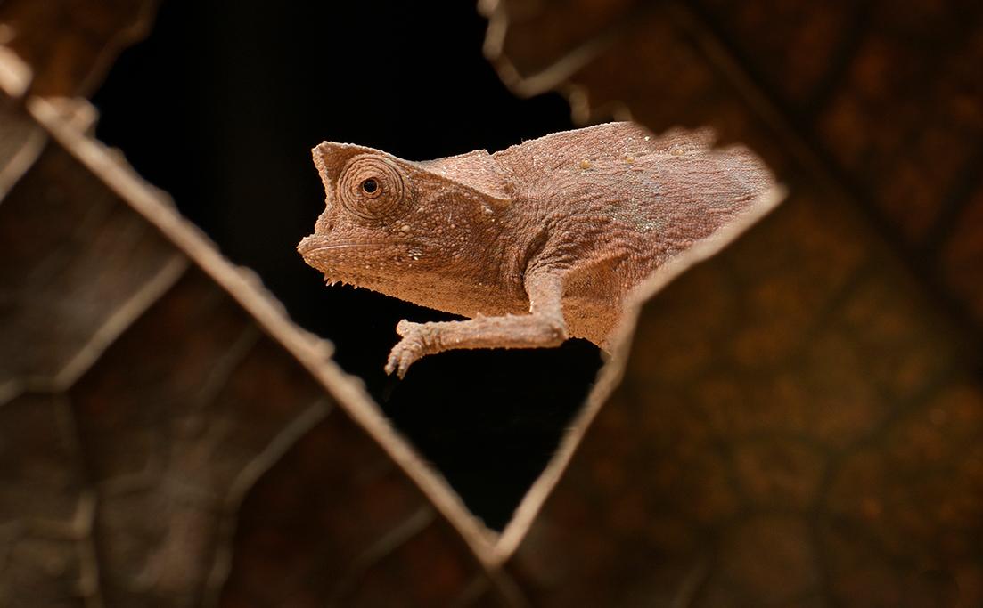 Foto-Tipps Framing (3) Chamäleon auf Madagaskar